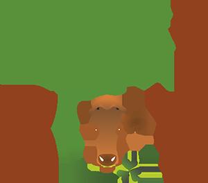 Оперативна група по ЕПИ-АГРИ изпробва иновативни диети с алтернативни фуражи при производството на говеждо месо