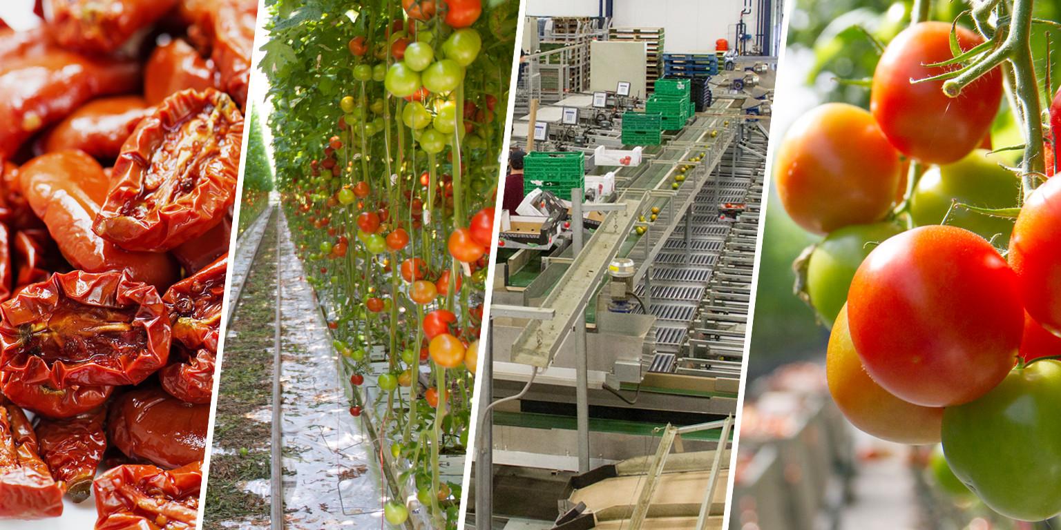 Вдъхновяваща идея от ЕПИ-АГРИ: Към кръгова градинарска система