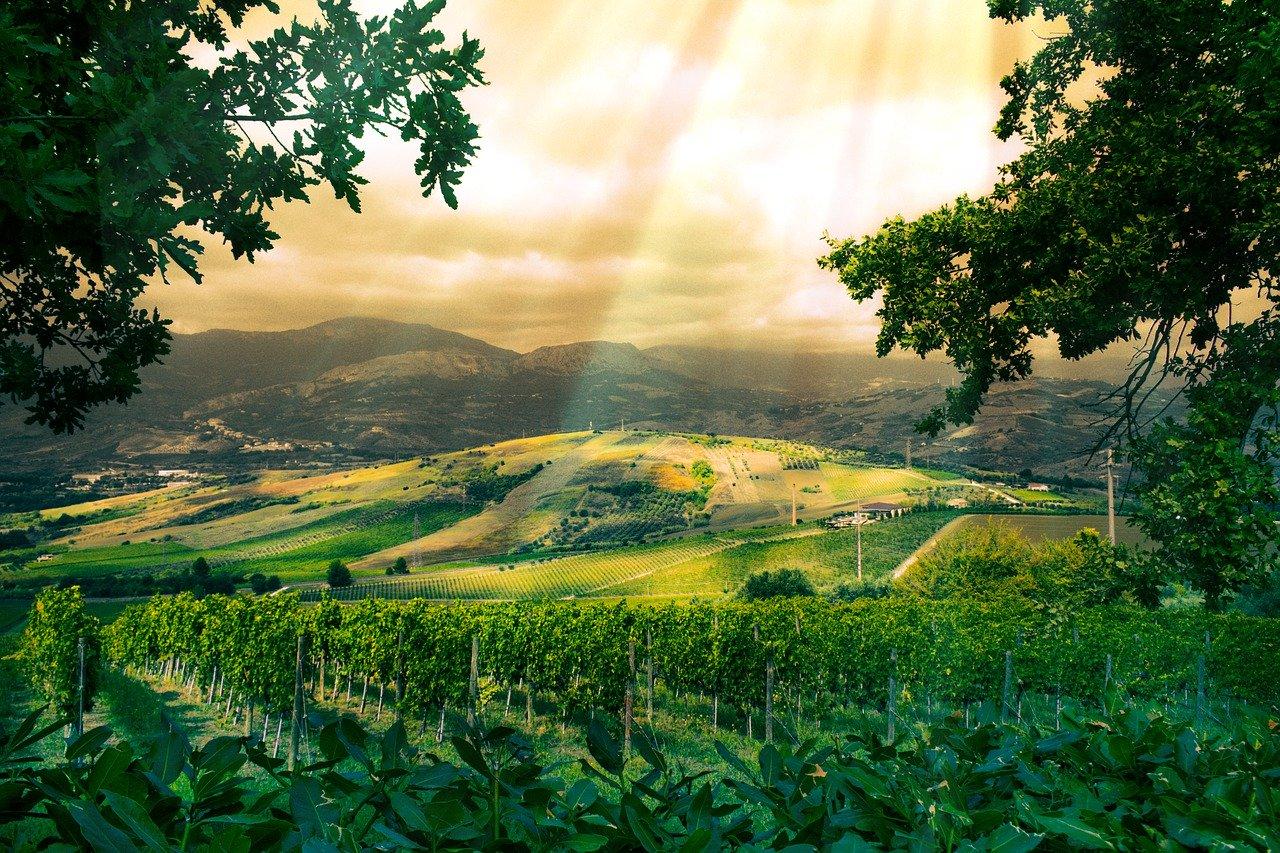"""До 30 юни се подават заявления по мярка """"Застраховане на реколтата"""" от НППЛВ 2019-2023 в ИАЛВ и ДФЗ"""
