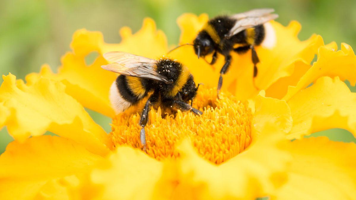 Задължителна регистрация в нова платформа на БАБХ до 31 януари 2021 за всички пчелари и стопани, които третират площи