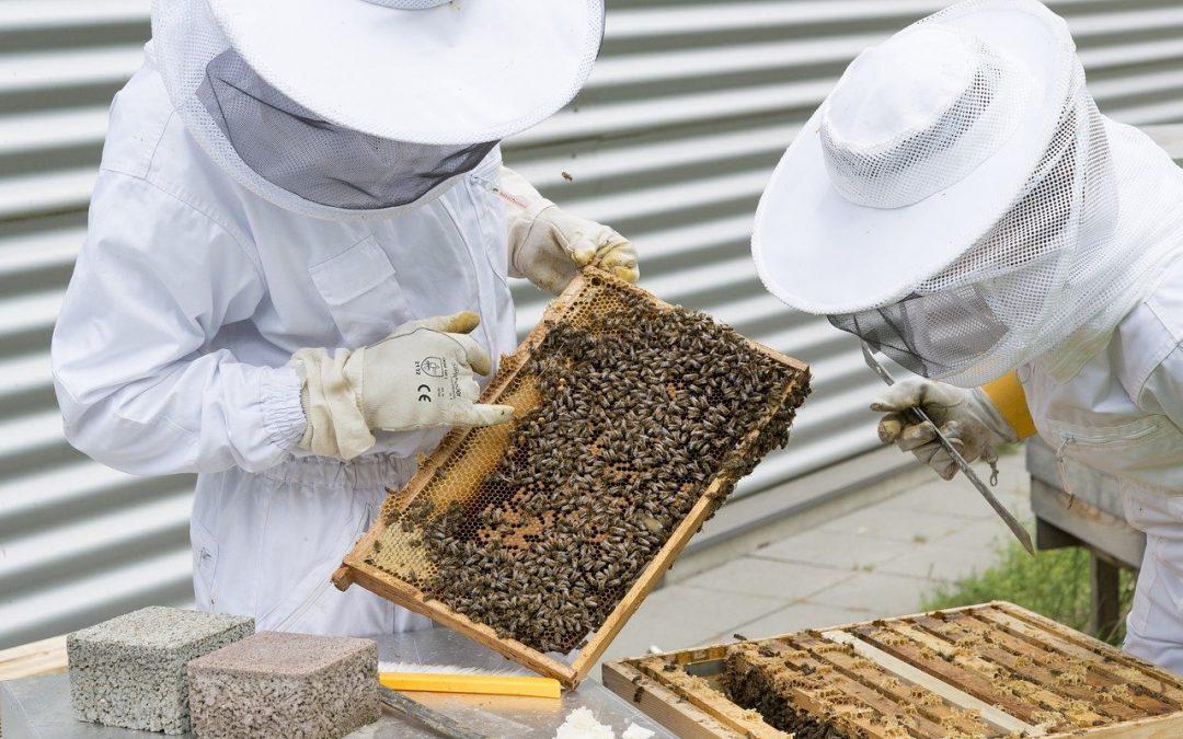 Пчеларите да се регистрират само в БАБХ предвиждат промени в Закона за пчеларството, до 9 ноември е общественото обсъждане