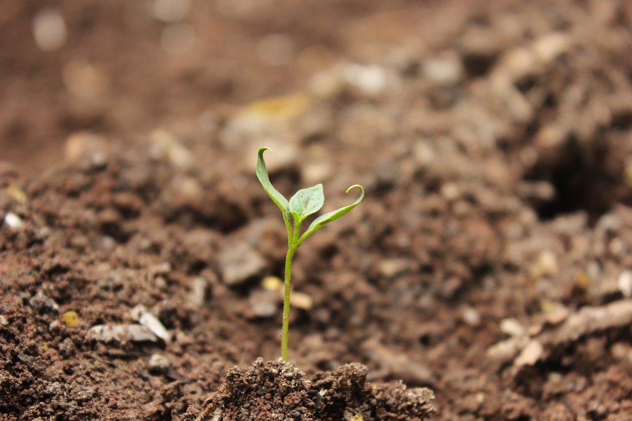 До 10 декември тече допитване на ЕК по пътната карта за нова стратегия за почвите на ЕС