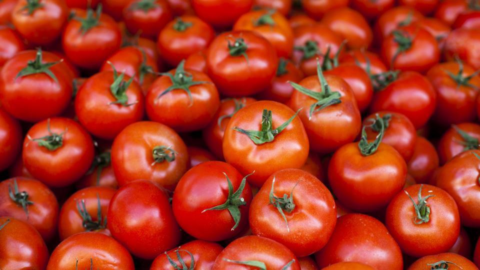 До 15 октомври 2021 г. е приемът на заявления за компенсиране на разходите за борба с вредителите по доматите