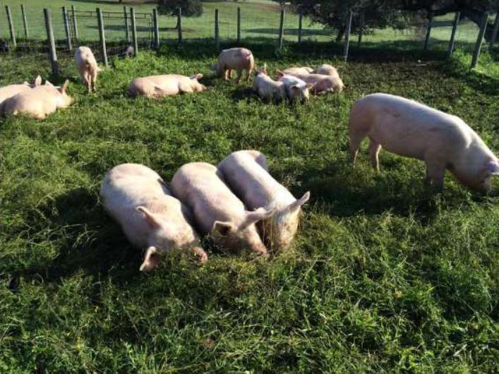 Агроиновация от Португалия за устойчиво управление на хранителните потоци при интензивни животновъдни системи