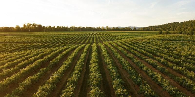 """Уъркшоп на 25 май """"Въглеродно земеделие в стратегическите планове за ОСП"""" към възложено от ЕК проучване"""