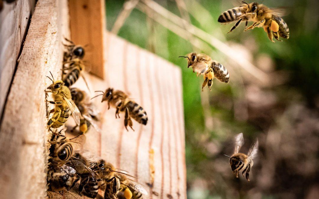 До 16 август пчеларите подават заявления за плащане за 2021 г. по НПП 2020-2022