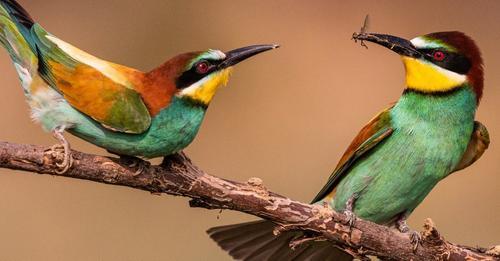 ЕАОС посочва защо се нуждаем от решителни действия сега, за да защитим европейската природата и как можем да се справим с кризата с биоразнообразието